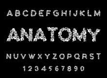 Anatomistilsort Skelett- abc Bokstavsben Skalle och rygg käke vektor illustrationer