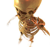 Anatomy. Golden Skeleton in 3D. Computer Graphic Stock Images