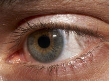 Anatomy of adult's eye. Eye closeup anatomy of adult royalty free stock photo