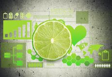 Anatomy. Background body care chart citrus design stock illustration