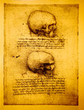 Anatomy. Art by Leonardo Da Vinci from 1492 vector illustration