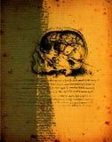 Anatomy art vector illustration