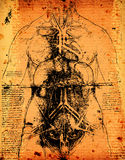 Anatomy art. By Leonardo Da Vinci from 1492 on textured background royalty free stock photos