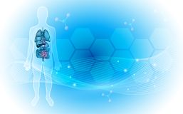 Anatomy backdrop. Human internal organs anatomy detailed illustration on an abstract blue background with glow Royalty Free Stock Image