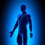 Anatomy Body - Iso View - Blue concept Stock Photos