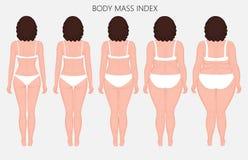 Anatomy_Body massindex för människokropp av europeiska kvinnor från bristnolla Royaltyfria Bilder