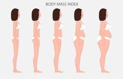 Anatomy_Body massindex för människokropp av europeiska kvinnor från bristnolla Arkivfoto