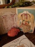 Anatomy book antique