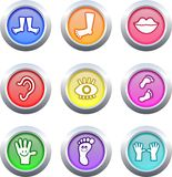 Anatomy buttons Royalty Free Stock Image