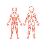 Anatomy of children muscular system, exercise and Royalty Free Stock Photo
