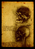 Anatomy. Close up of Old anatomy drawings by Leonardo Da Vinci Royalty Free Stock Image