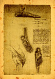 Anatomy. Close up of Old anatomy drawings by Leonardo Da Vinci vector illustration