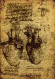 Anatomy. Close up of Old anatomy drawings by Leonardo Da Vinci Royalty Free Stock Photography