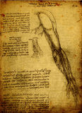 Anatomy. Close up of Old anatomy drawings by Leonardo Da Vinci Stock Images