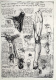 Anatomy stock illustration