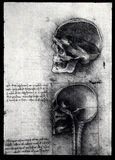 Anatomy Stock Images