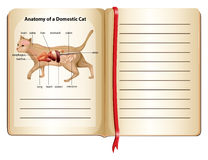 Anatomy of a domestic cat Stock Images