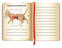 Anatomy of a domestic cat. Illustration stock illustration