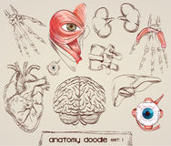 Anatomy drawings Stock Images