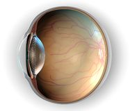 Anatomy of Eye. Sagittal section of left eyeball showing the major anatomical parts Stock Image