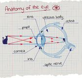 Anatomy of the Eye Stock Photography