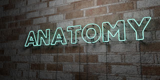 ANATOMY - Glowing Neon Sign on stonework wall - 3D rendered royalty free stock illustration. Can be used for online banner ads and direct mailers vector illustration