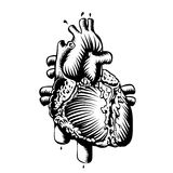 Anatomy heart. Black and white design Royalty Free Stock Photography