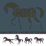'Anatomy' of a Horse Pictogram Royalty Free Stock Photo