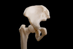 Anatomy of human hip joint and pelvis. Human hip anatomy  isolated on black background Royalty Free Stock Photography