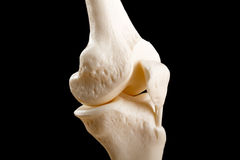 Anatomy of human knee joint Royalty Free Stock Images