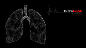 Anatomy of Human Lungs. 3d Illustration of Anatomy of Human Lungs vector illustration