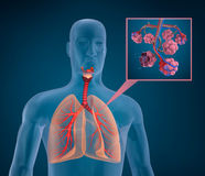 Anatomy of human respiratory system. Blood saturating by oxygen Royalty Free Stock Photos