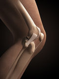 Anatomy of the knee. 3d rendered illustration - anatomy of the knee Stock Photos