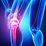 Anatomy of Knee pain isolated in blue Royalty Free Stock Photography
