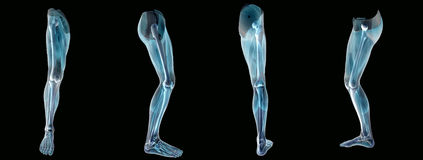 Anatomy an leg  x-ray Stock Photo