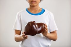 Selective focus of a human liver. Anatomy lesson. Selective focus of a human liver being in hands of a nice serious teenager royalty free stock photography
