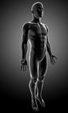 Anatomy of male body Stock Images
