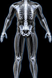 Anatomy Stock Photos