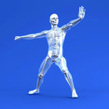 Anatomy -  Martial Arts Royalty Free Stock Image