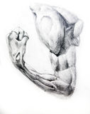 Anatomy Muscles.Drawing studio works. Anatomy the muscle of the man is drawn by a pencil on a white paper.Drawing studio works Stock Photos
