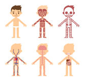 Anatomy organ chart. My body, educational anatomy body organ chart for kids. Cute cartoon little boy and his bodily systems: muscular, skeletal, circulatory vector illustration