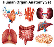 Anatomy Stock Images