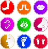 Anatomy sign icons Stock Photos