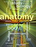 Anatomy wordcloud concept illustration glowing Royalty Free Stock Photo