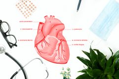 Anatomy. Workplace of doctor with medical items. Anatomy. Workplace of doctor - stethoscope, medical items royalty free illustration