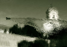 Anatra Fotografia Stock