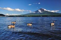 Anatra che galleggia nel lago Immagine Stock Libera da Diritti