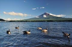 Anatra che galleggia nel lago Fotografia Stock Libera da Diritti