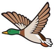 Anatra dell'uccello Fotografia Stock