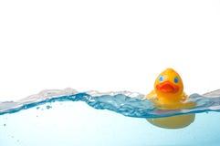 Anatra di gomma in acqua Fotografia Stock
